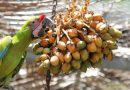 Ex Situ Conservation and How it Helps Endangered Macaws
