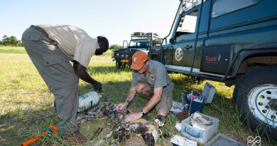 Clearing the Path for Painted Dogs