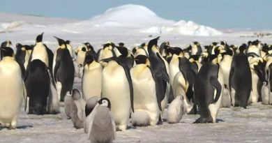 Satellites reveal hidden colonies of Emperor penguins we never knew existed
