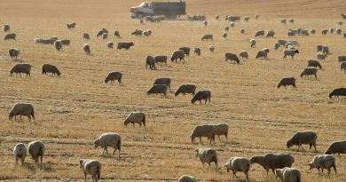 California's Relentless Droughts Strain Farming Towns