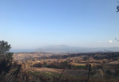 The Fires That Raged on This Greek Island Are Out. Now Northern Evia Faces a Long Road to Recovery